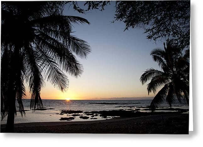 Palm Sunset Greeting Card by Peter French