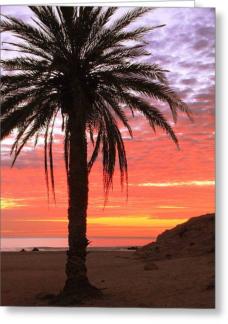 Palm Tree And Dawn Sky Greeting Card