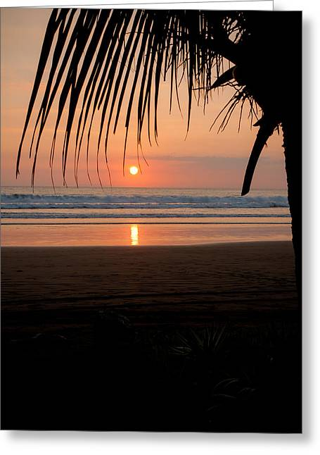 Palm Tree At Sunset Greeting Card by Anthony Doudt