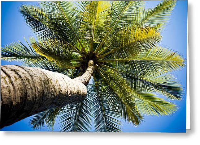 Palm Tree From Below Greeting Card by Anthony Doudt