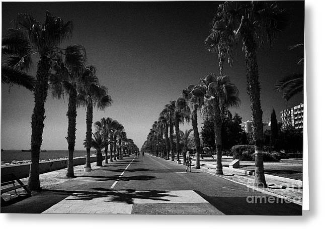 palm tree lined seafront promenade in twin cities park on reclaimed land Limassol lemesos Greeting Card by Joe Fox