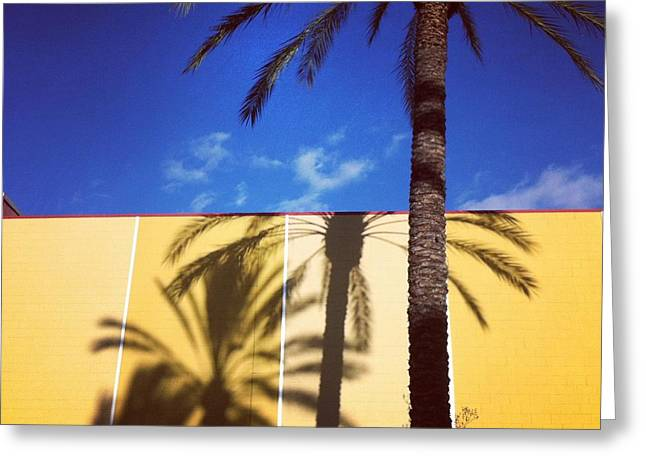 Palm Tree Shadows Greeting Card by Ann Marie Donahue