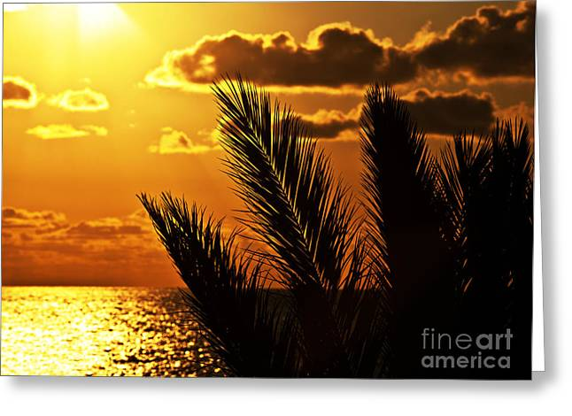 Palm Tree Silhouette At Sunset On The Beach Greeting Card by Anna Om