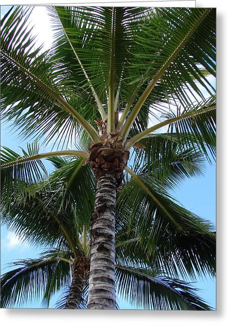 Palm Tree Umbrella Greeting Card by Athena Mckinzie