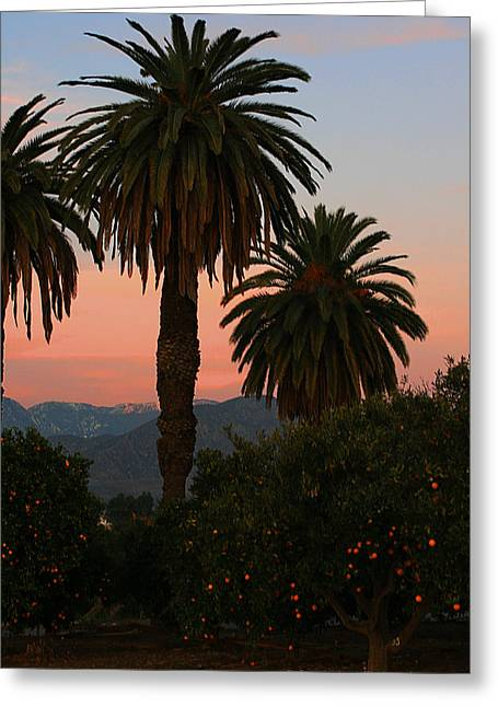 Palm Trees And Orange Trees Greeting Card by Dorothy Cunningham
