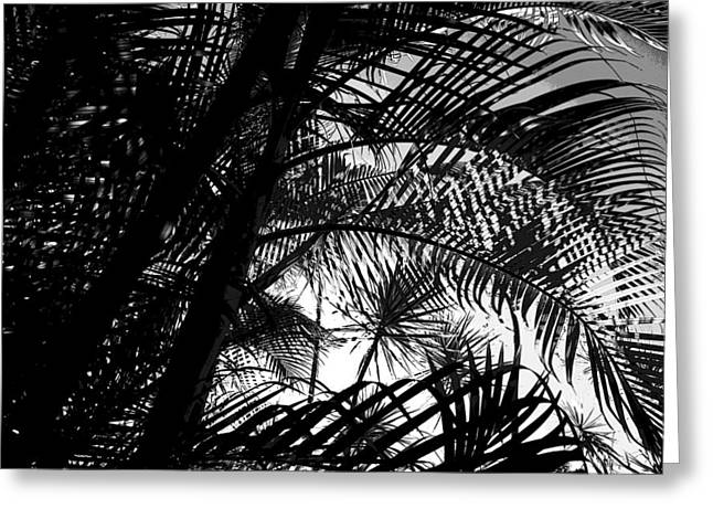 Palm Trees Greeting Card by Colleen Cannon