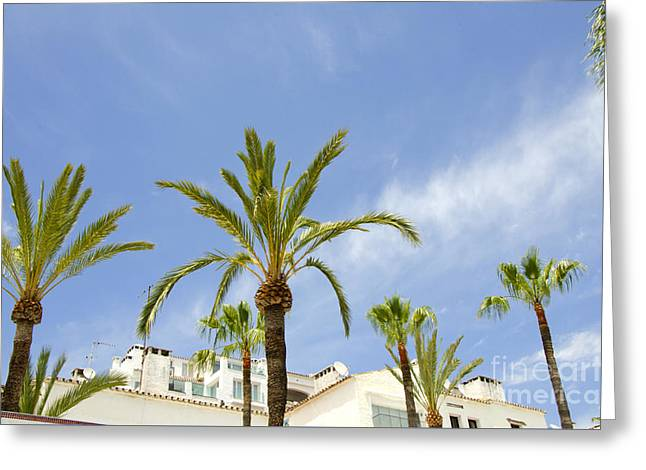 Palm Trees In The Blue Greeting Card by Perry Van Munster