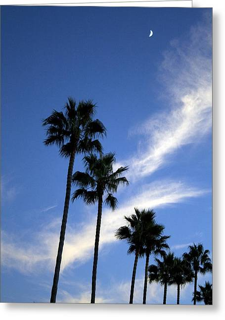 Palm Trees In The Sky Greeting Card by Terry Thomas