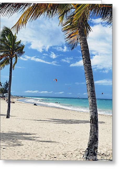 Palm Trees On Ocean Park Beach Greeting Card by George Oze