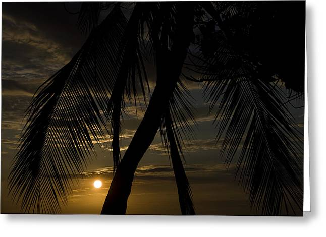 Palm Trees Silhouetted By The Setting Greeting Card by Todd Gipstein
