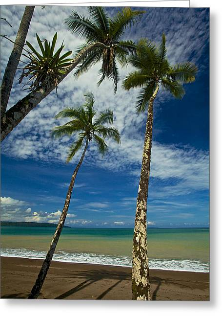 Palm Trees Greeting Card by Simone Pastore