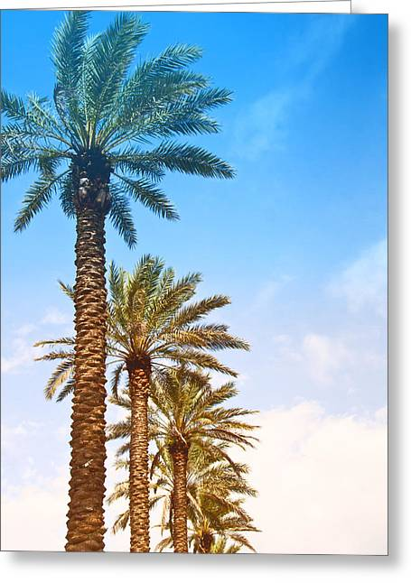 Greeting Card featuring the photograph Palm Trees by Susi Stroud