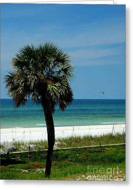 Palmetto And The Beach Greeting Card by Susanne Van Hulst