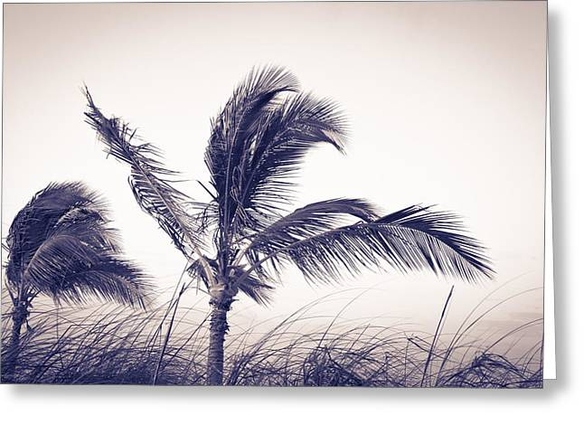 Palms 4 Greeting Card