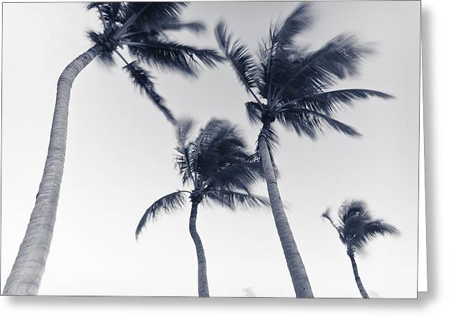 Palms 5 Greeting Card