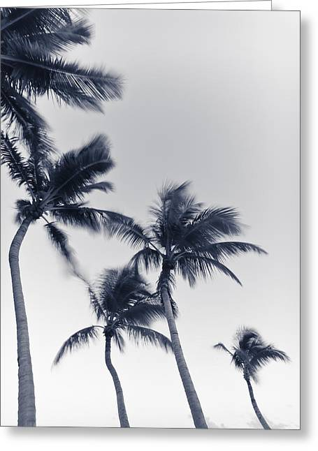 Palms 6 Greeting Card