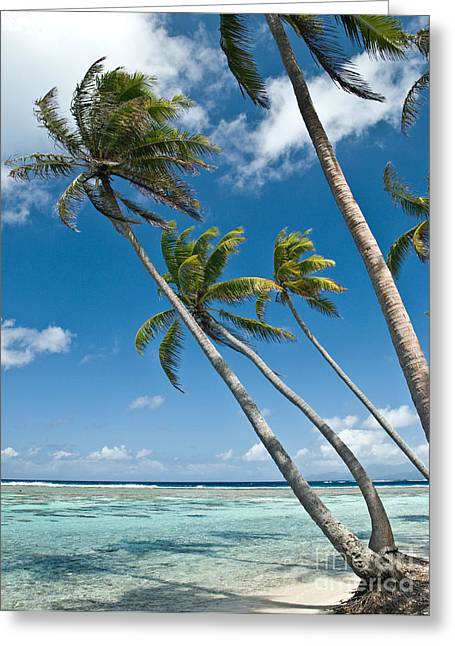 Palms In The Wind Greeting Card by Jim Chamberlain