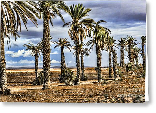 Palms Morocco I Greeting Card by Chuck Kuhn