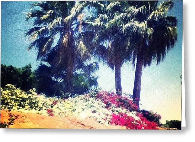 #palms #trees #beach #webstagram Greeting Card by Andrea Bigiarini