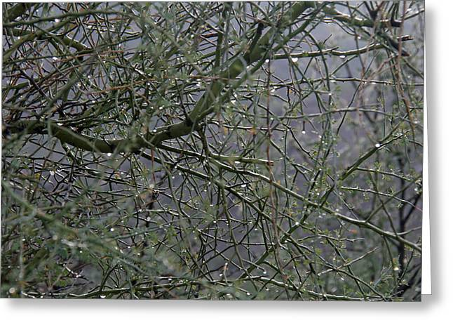 Palo Verde In The Rain Greeting Card