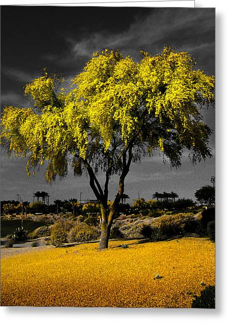 Palo Verde Greeting Card by Jim Painter