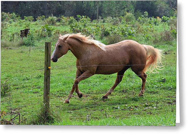 Palomino Running Behind Fence - 7255e Greeting Card by Paul Lyndon Phillips