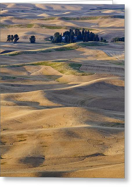Palouse Harvest Greeting Card