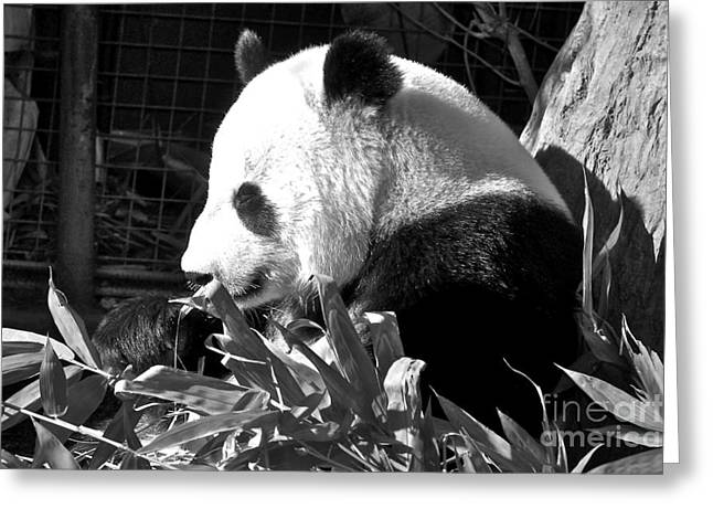 Panda Baby Greeting Card by Carol  Bradley
