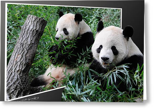 Panda Out Of Frame Greeting Card