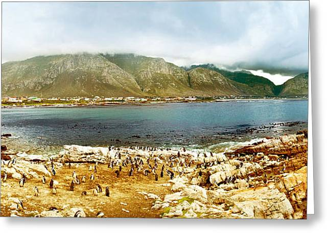 Panoramic Landscape With Penguins Greeting Card by Anna Om