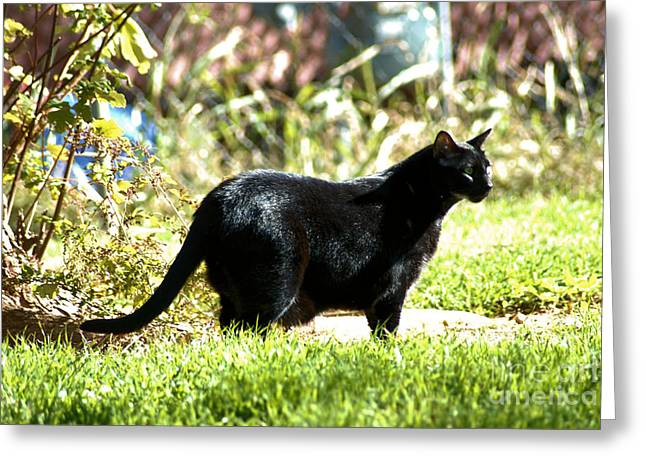 Panther In The Backyard Greeting Card by Cheryl Poland