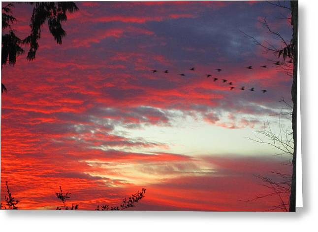 Greeting Card featuring the photograph Papaya Colored Sunset With Geese by Kym Backland