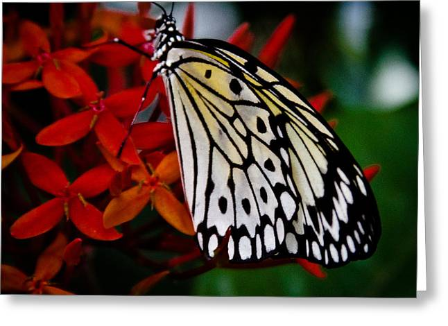 Paper Kite Butterfly Greeting Card by David Patterson