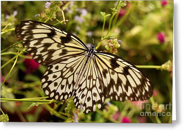 Greeting Card featuring the photograph Paper Kite Butterfly by Eva Kaufman