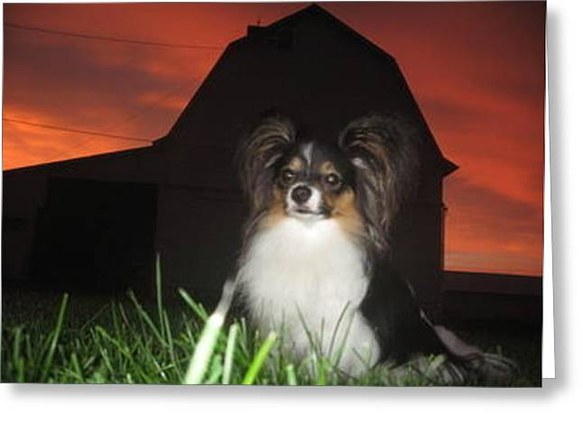 Papillon Sunset 2 Greeting Card by Christine Phillips