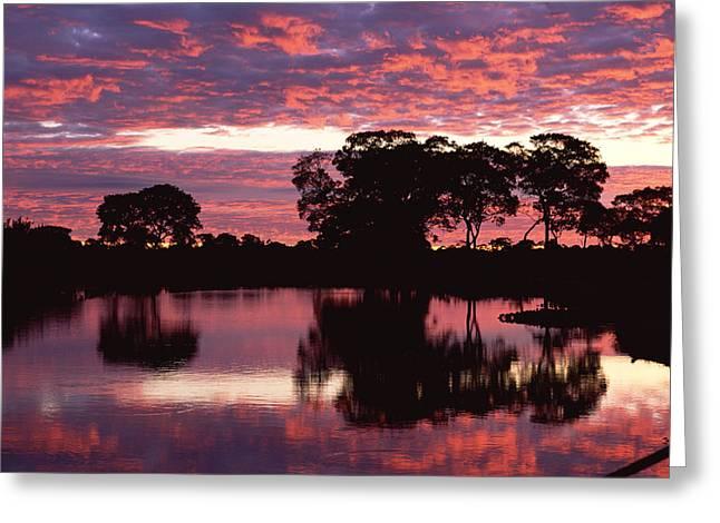 Paraguay River At Sunset, Pantanal Greeting Card by Konrad Wothe