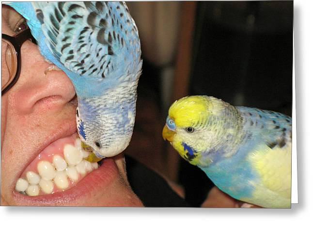 Greeting Card featuring the photograph Parakeet Dentists by Kimberly Mackowski