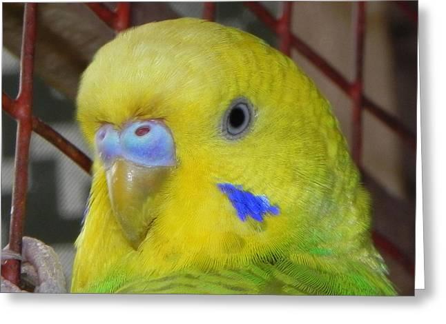 Parakeet Inside Cage Greeting Card by Arindam Raha