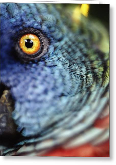 Parrot, Close Up Greeting Card by Axiom Photographic