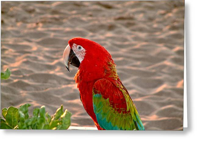 Parrot In Maui Greeting Card