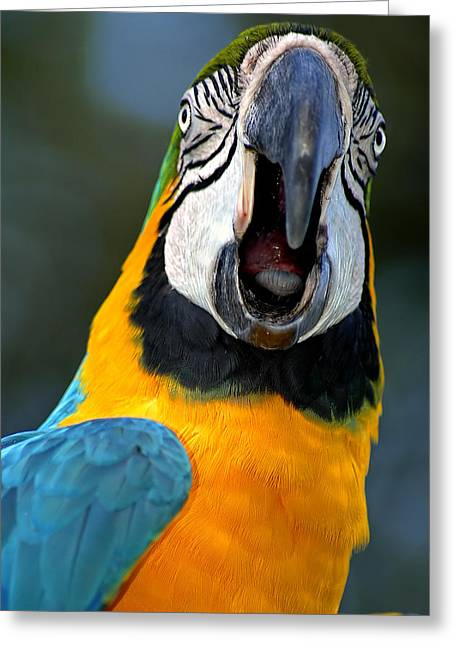 Parrot Squawking Greeting Card by Carolyn Marshall