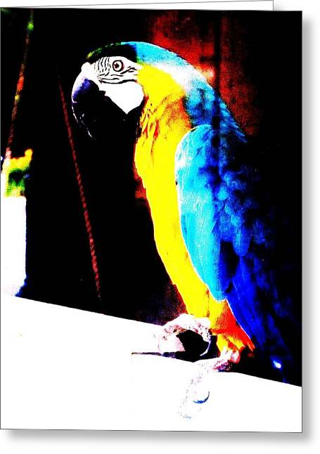 Parrot Greeting Card by Todd Sherlock
