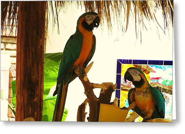 Greeting Card featuring the photograph Parrots Of Penasco by Rand Swift