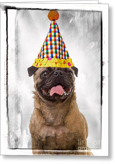 Party Animal Greeting Card by Edward Fielding