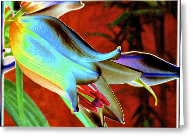 Party Lily Closd Greeting Card