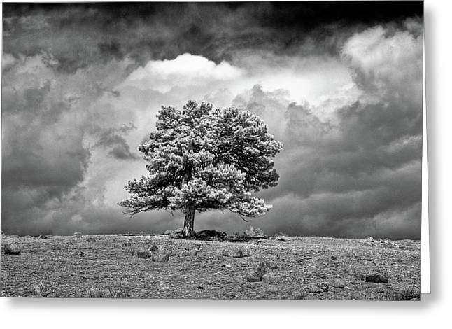 Passing Storm Greeting Card by G Wigler