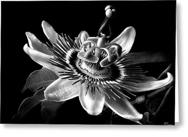 Passion Flower In Black And White Greeting Card by Endre Balogh