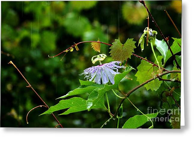 Passion Flower In The Rain Greeting Card by Theresa Willingham