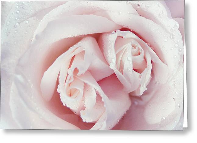 Passion For Flowers. One Rose Two Hearts Greeting Card by Jenny Rainbow