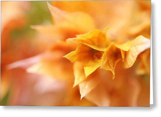 Passion For Flowers. Orange Delight Greeting Card by Jenny Rainbow